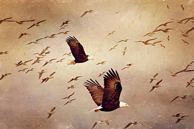 Photograph - Bald Eagles And Seagulls by Peggy Collins