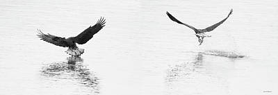 Photograph - Bald Eagles Fishing by Crystal Wightman