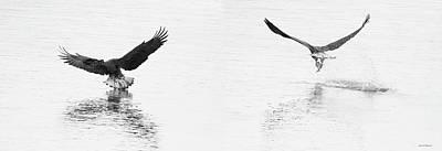 Bald Eagles Fishing Art Print
