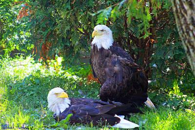 Rucker Photograph - Bald Eagles by Michael Rucker