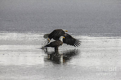 Photograph - Bald Eagles by Spencer Baugh