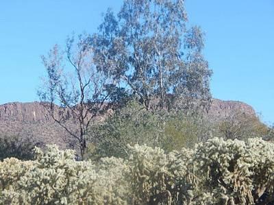 Photograph - Balding Trees Tucson Arizona Foothills by Mozelle Beigel Martin