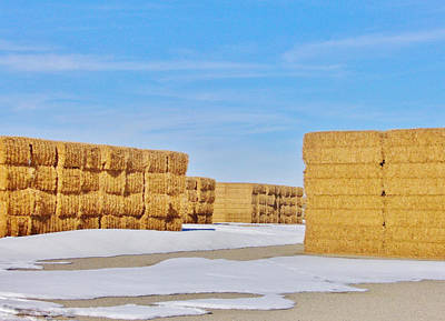 Photograph - Baled by Marilyn Diaz