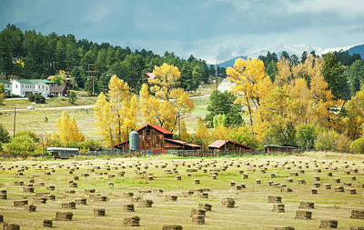 Photograph - Bales And Aspen by Marilyn Hunt