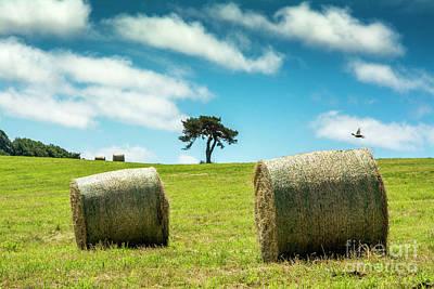 Bale Photograph - Bales Of Straw In A Field, Auvergne, France by Bernard Jaubert