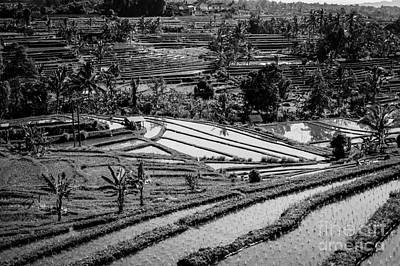 Photograph - Bali Rice Fields by M G Whittingham