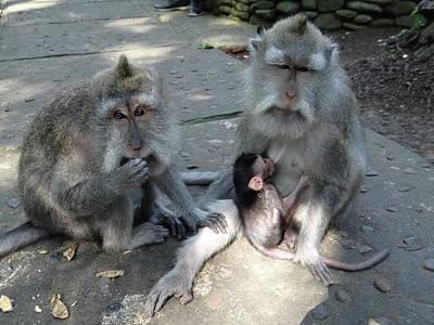 Exploramum Photograph - Balinese Monkey Family by Exploramum Exploramum