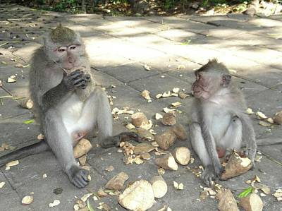 Photograph - Balinese Monkeys Eating by Exploramum Exploramum