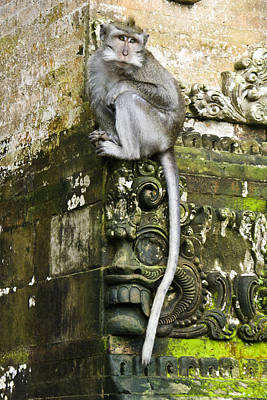 Photograph - Balinese Temple Monkey by Michele Burgess