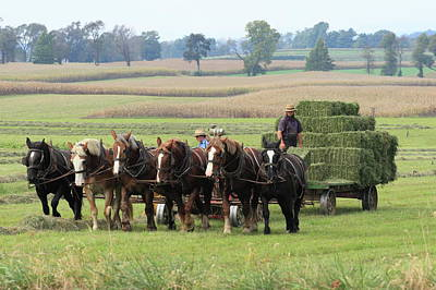 Photograph - Baling The Hay by Lou Ford