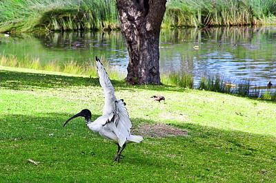 Photograph - Ballet In The Park by Miroslava Jurcik