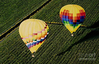 Balloons Over Napa Valley Original by Cindy Lee Longhini