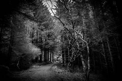 Photograph - Ballycastle Forest Path by Alex Leonard