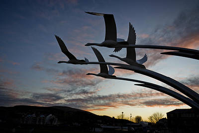 Photograph - Ballycastle Swans by Alex Leonard