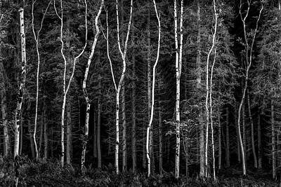 Photograph - Ballysallagh Forest Mono by Glen Sumner