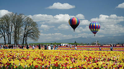Photograph - Baloons And Tulips by Nick Boren