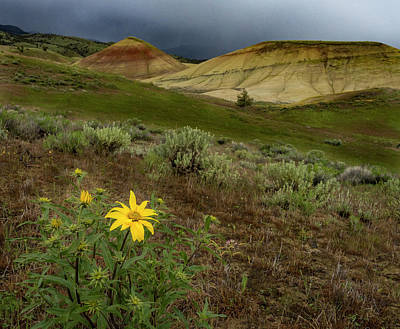 Photograph - Balsam At Painted Hills by Jean Noren