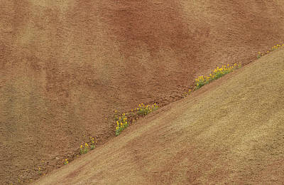 Balsam In Painted Hills Diagonal Art Print by Jean Noren