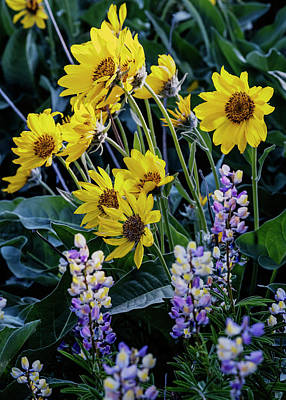 Photograph - Balsam Roots And Lupines by Vishwanath Bhat