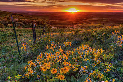 Photograph - Balsamroot Sunset by Mark Kiver