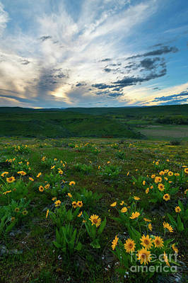Photograph - Balsamroot Sunset by Mike Dawson