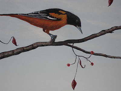 Baltimore Orioles Painting - Baltimore Oriole Too by Candace Shockley