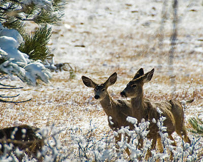 Photograph - Bambi And Bimbo by Harry Strharsky