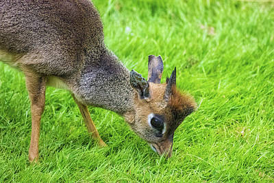 Bambi Eyes Art Print by Martin Newman
