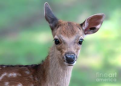 Photograph - Bambi by Eyeshine Photography