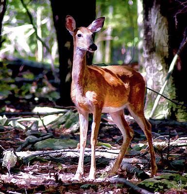 Photograph - Bambi by Pennie  McCracken