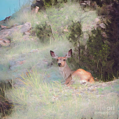 Photograph - Bambi - The Early Years by Jon Burch Photography