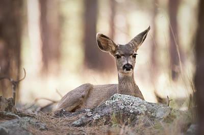 Photograph - Bambi Watch  by Saija Lehtonen