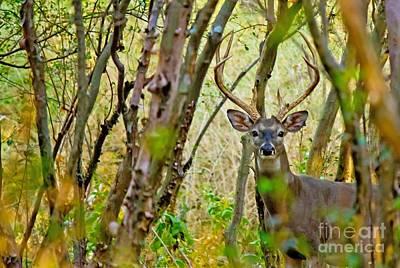 Photograph - Bambi's Father by Michael Tidwell