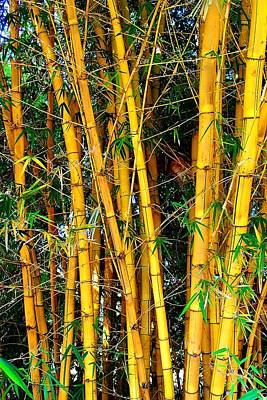 Photograph - Bamboo 02 by Dora Hathazi Mendes