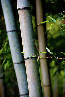 Bamboo #2 Art Print