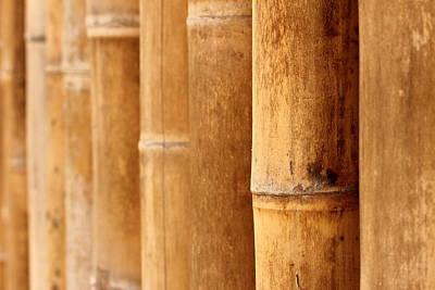 Bamboo 4 Art Print
