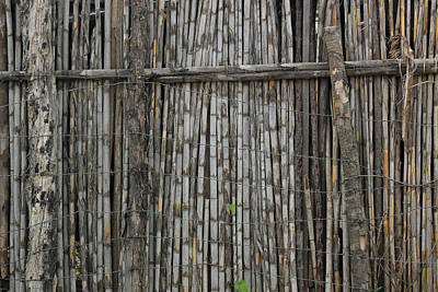 Bamboo And Barbed Wire Fence Art Print