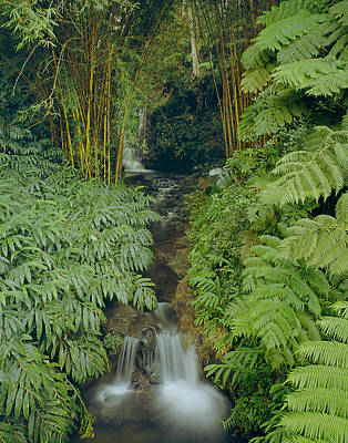Photograph - 100837-bamboo And Ferns Creek  by Ed  Cooper Photography