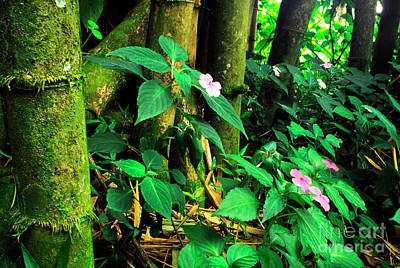 Bamboo And Impatiens El Yunque National Forest Art Print by Thomas R Fletcher