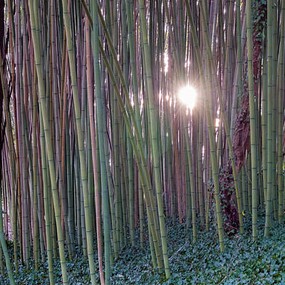 Photograph - Bamboo And Ivy by Brian Shepard