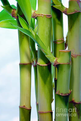 Stalk Photograph - Bamboo And Sky by Olivier Le Queinec