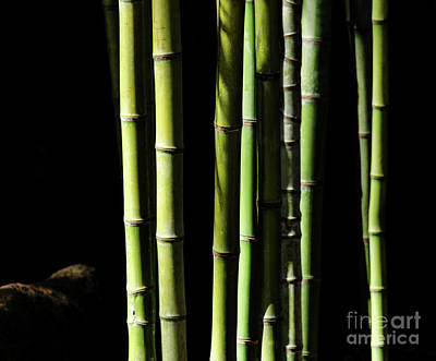 Photograph - Bamboo by Andrea Anderegg