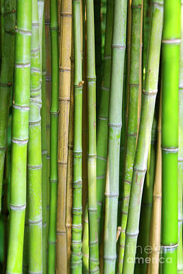 Bamboo Background Print by Carlos Caetano