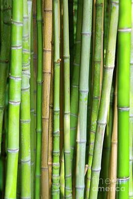 Segment Photograph - Bamboo Background by Carlos Caetano
