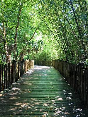 Photograph - Bamboo Boardwalk by Kay Gilley