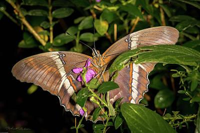 Photograph - Bamboo Butterfly by Robert Culver