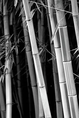 Photograph - Bamboo Bw by Athena Mckinzie