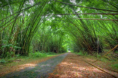 Photograph - Bamboo Cathedral by Nadia Sanowar
