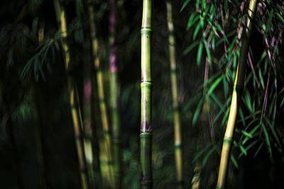 Photograph - Bamboo by David Harding
