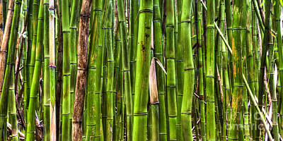 Trees In The Forest Photograph - Bamboo by Dustin K Ryan